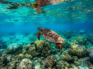 Paradise Explore Make To Diving